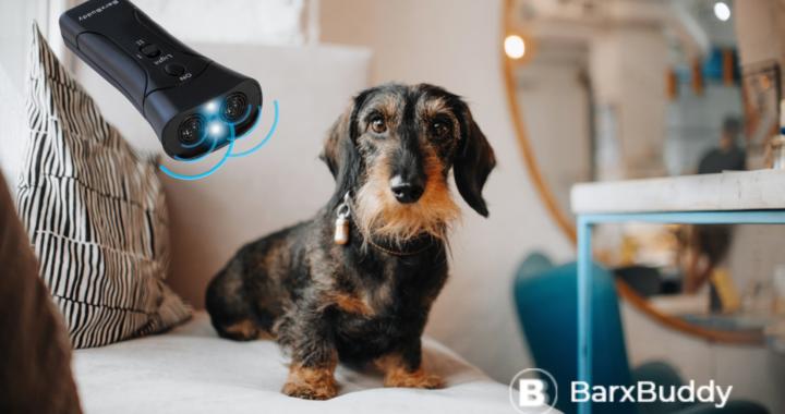BarxBuddy Review - Transform your dog's behavior.