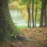 Grants Assist Provides Insight on Government Grants for Green Initiatives